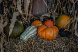 Pumpkin Mania – Belluz Farms